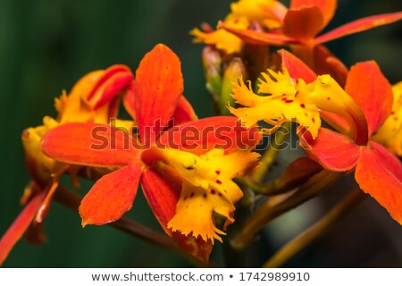 Pink exotic flower orchid with natural pattern. Macro photo as natural background. Stock photo © artjazz