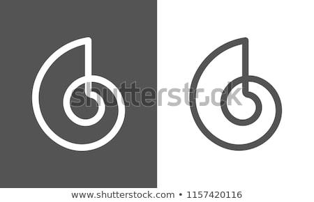 seashell conch icon closeup vector illustration stock photo © robuart
