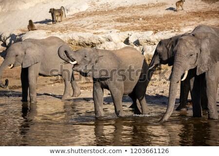 Animals and riverbank Stock photo © colematt