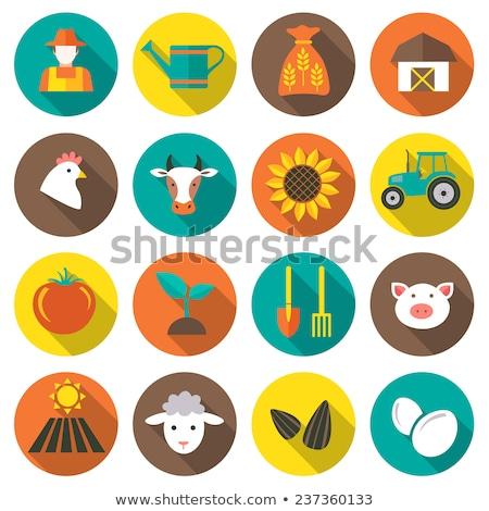 Farming flat icons Stock photo © netkov1