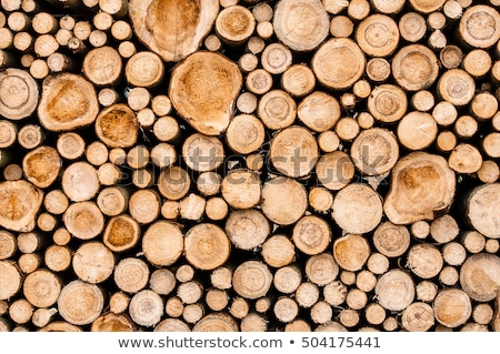 Pile of cut tree trunks Stock photo © lichtmeister