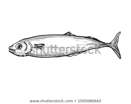 Новая Зеландия рыбы Cartoon ретро рисунок стиль Сток-фото © patrimonio