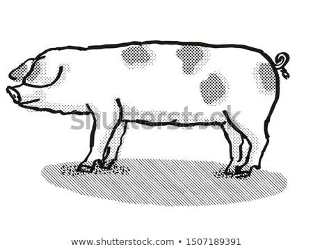 Сток-фото: старые · Места · свинья · Cartoon · ретро
