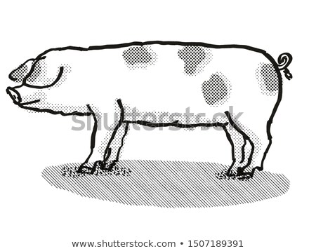 Gloucestershire Old Spots Pig Breed Cartoon Retro Drawing Stock photo © patrimonio