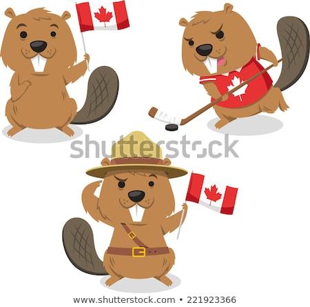 north american beaver isolated animal cartoon stock photo © cienpies