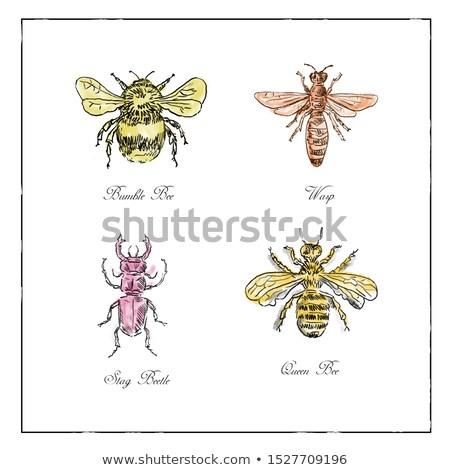 ape · vespa · scarabeo · regina · vintage · raccolta - foto d'archivio © patrimonio