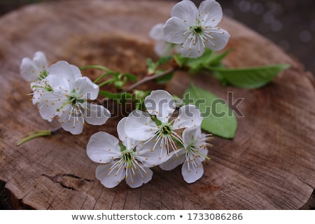 A bunch of flowers on white on tree stump Stock photo © flariv