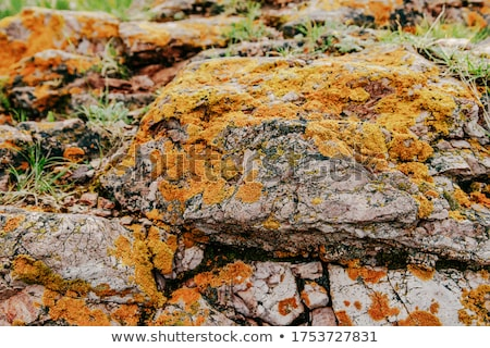 石 · 菌 · 風化した · 黄色 · 抽象的な · テクスチャ - ストックフォト © gewoldi