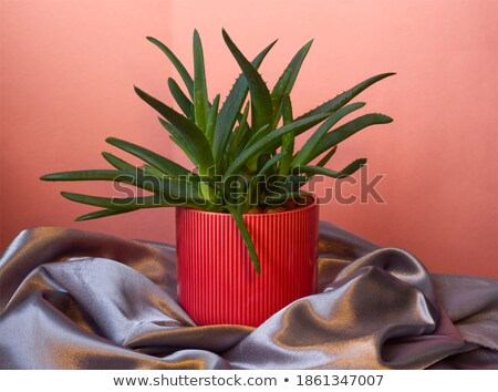 Red fabric drapes on gray background stock photo © Ecelop