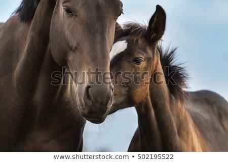 черно · белые · лошади · кобыла · жеребенок · трава - Сток-фото © julietphotography