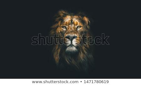Aslan arka plan siluet beyaz hayvan çizim Stok fotoğraf © perysty