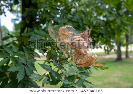 Fall Webworm Stock photo © macropixel