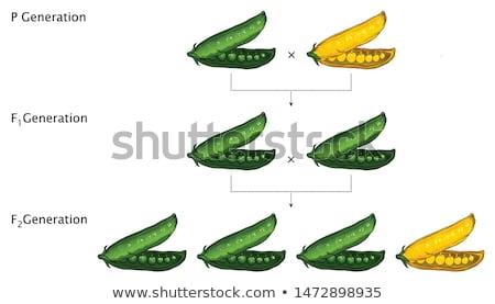 green and yellow peas stock photo © zhekos