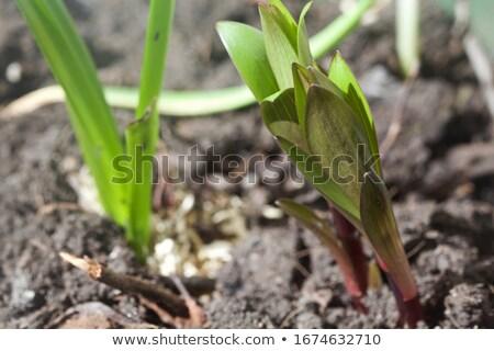 nieuwe · groene · emmer · leven · jonge · studio - stockfoto © compuinfoto