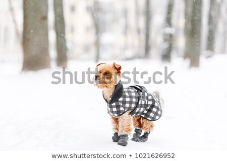 doggy and boot Stock photo © arcoss