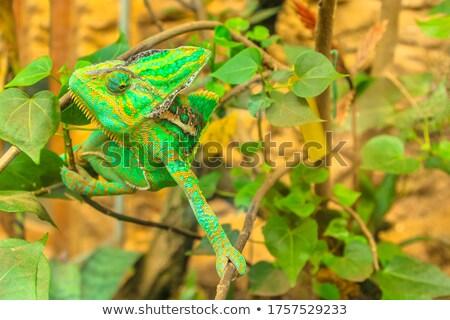Lidmaat detail natuur jonge dier klim Stockfoto © Nneirda