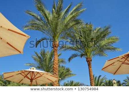 esernyő · Vörös-tenger · víz · hal · kék · élet - stock fotó © monticelllo