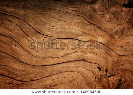 Spleet hout diep natuur Stockfoto © luminastock
