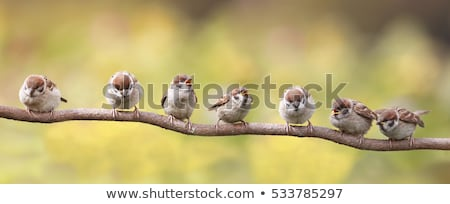cute · Herbst · Mädchen · Vogel · Illustration · Vektor - stock foto © balasoiu