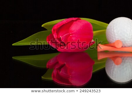 Stockfoto: Rood · tulp · golf · zwarte · glas