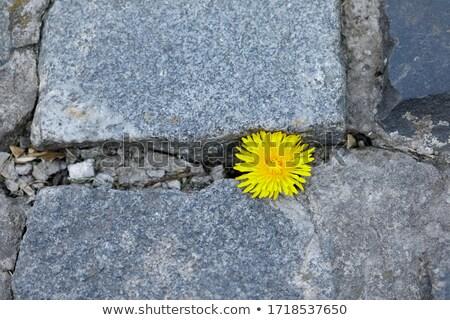 brick road through garden Stock photo © art9858