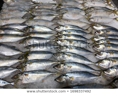 bunch of fresh fish Stock photo © mayboro