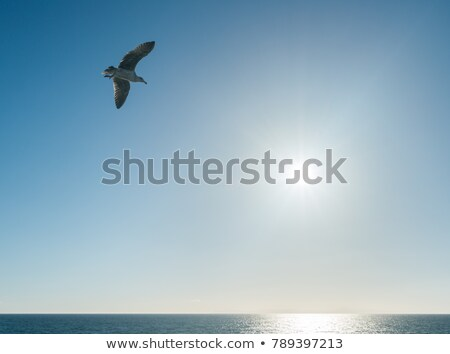 seagull soaring over the sea at sunset stock photo © all32