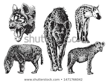 doodle hyena Stock photo © netkov1