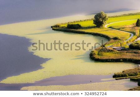 Swampland At Lake Hopfensee Zdjęcia stock © manfredxy