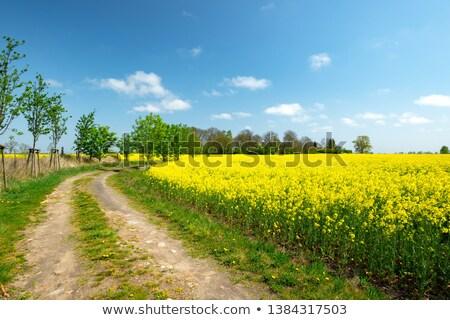 campi · alberi · cielo · blu · nubi · primavera - foto d'archivio © meinzahn