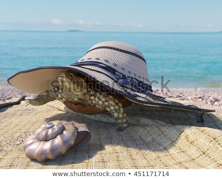 Relaxing Vacation Concept Background With Seashell Turtle And Beach Accessories Stok fotoğraf © denisgo
