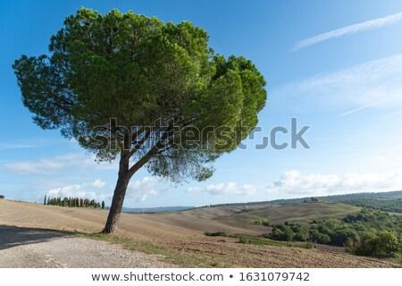 Toskana · bağ · ünlü · şarap · bölge · İtalya - stok fotoğraf © taiga
