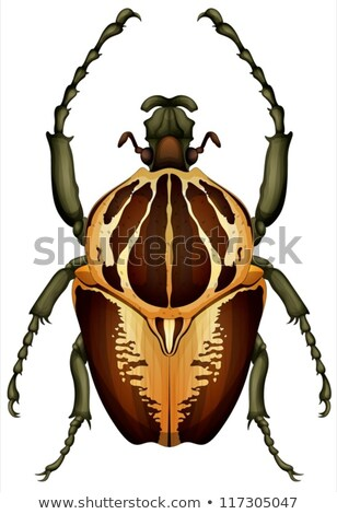 Goliathus regius - Goliath beetle Stock photo © bluering
