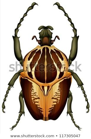 Bogár illusztráció fehér háttér állat rovar Stock fotó © bluering