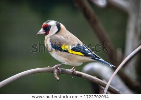 Pássaro ramo isolado ilustração projeto arte Foto stock © ConceptCafe