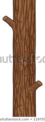Huş ağacı ağaç havlama doku güzel doğal Stok fotoğraf © jonnysek