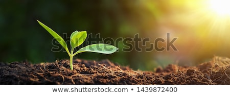 Green plants on earth Stock photo © bluering