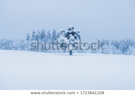 зима · области · Солнечный · морозный · день · Blue · Sky - Сток-фото © alinamd