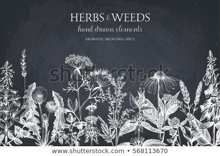 naadloos · Ierse · groene · patroon · klaver · hart - stockfoto © lilac