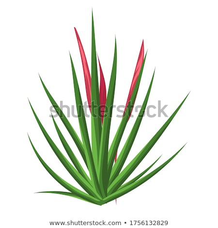 summer paradise design of exotic jungle palm tree stock photo © cienpies