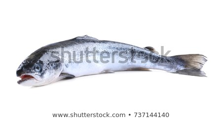Salmón peces aislado blanco orgánico naturales Foto stock © robuart