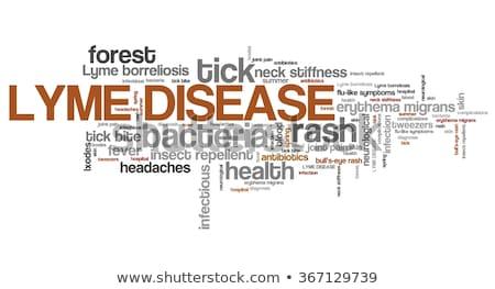 ziekte · menselijke · insect · bloed · huid - stockfoto © tashatuvango
