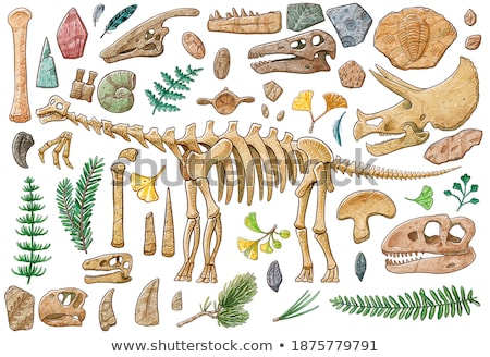 Tyrannosaurus collection of items. Bones and the skeleton. Head  Stock photo © popaukropa