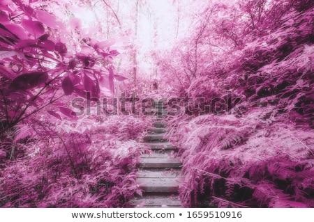 Drogowego dżungli stylizowany malowniczy niebo drzewo Zdjęcia stock © tracer