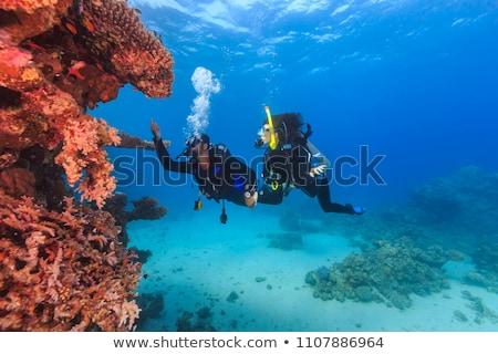 Two scuba divers underwater Stock photo © bluering