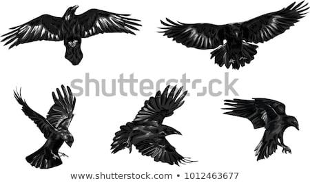 Estilizado preto vetor pássaro asas símbolo Foto stock © blaskorizov