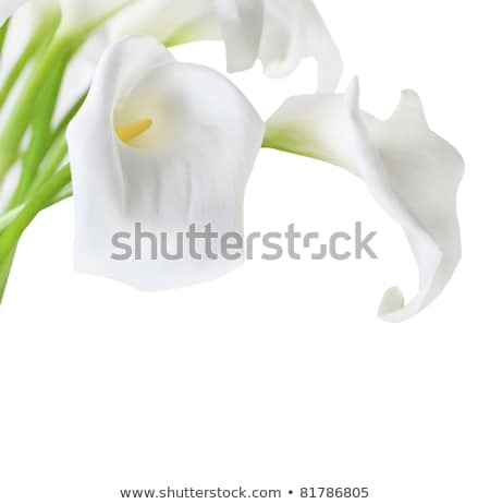 Cala lily bunch Stock photo © simply