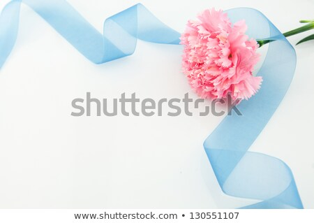White pink carnation flower on green stalk bouquet Stock photo © orensila