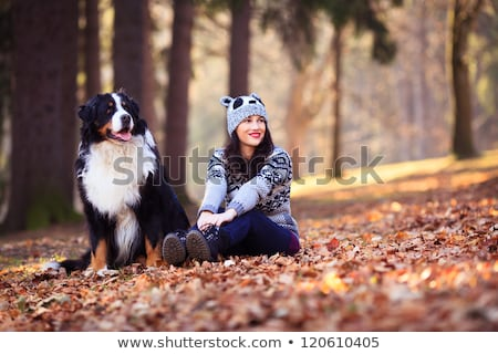 cute girl with her dog in autumn park bernese mountain dog stock photo © lopolo