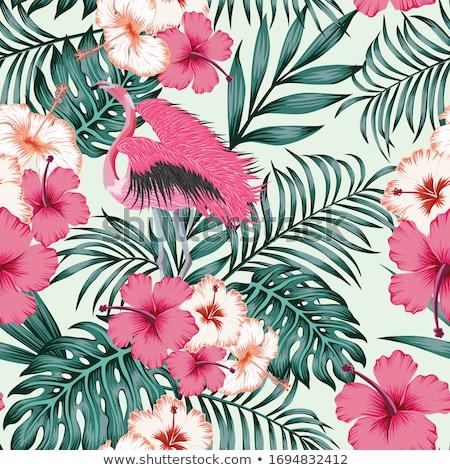 kırmızı · ebegümeci · çiçek · tropikal · bitki · moda - stok fotoğraf © colematt